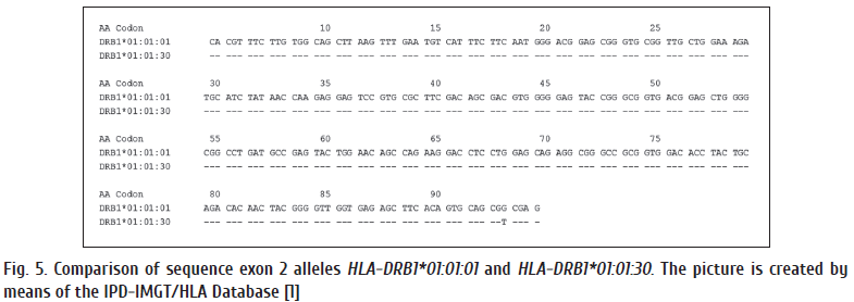 Fig. 5. Comparison of sequence exon 2 alleles HLA-DRB1.png